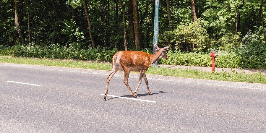 Accidentes de tráfico por atropello de animales